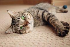 Kattunge som ut sträcks på matta Arkivfoton