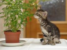 Kattunge som välter blomman fotografering för bildbyråer
