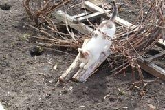 Kattunge som vässar dess jordluckrare Royaltyfri Fotografi