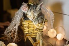 Kattunge sovande i en korg ålder 2 månader royaltyfri foto
