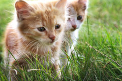 Kattunge två på grönt gräs Arkivfoto