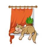 Kattunge w Royaltyfria Bilder
