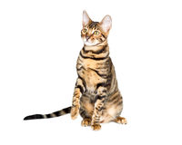 Kattungeaveltoyger arkivfoto