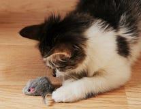 Kattungejakter för en leksakmus Arkivfoton