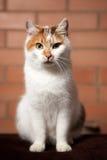 Kattungekort stavelseavel Royaltyfri Bild