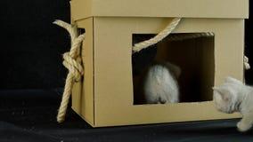 Kattungelek med en kartong lager videofilmer