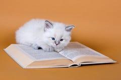 kattungemaskeradneva Fotografering för Bildbyråer