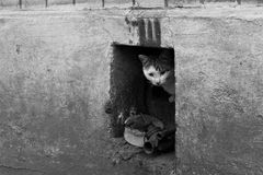 Kattungen är i attackposition Royaltyfria Bilder