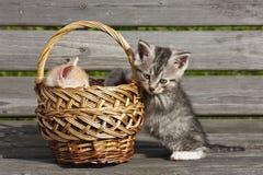 Kattungen Arkivfoto