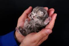 Kattungen behandla som ett barn royaltyfria bilder