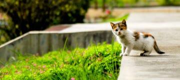 Kattungen framme av kameran arkivbilder