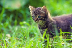 Kattungen går på gräset arkivfoto
