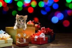 Kattungen i en gåva boxas Royaltyfri Bild