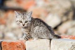 Kattungen klättrar tegelstenar Arkivbilder