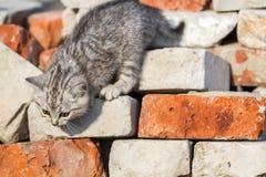 Kattungen klättrar tegelstenar Arkivfoto