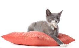 Kattungen lägger på kudden Arkivbild