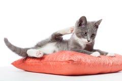 Kattungen lägger på kudden Royaltyfria Bilder