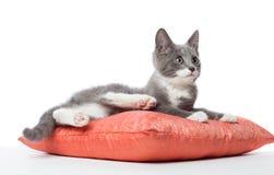 Kattungen lägger på kudden Arkivfoto