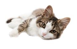 Kattungen ligger på en sida Royaltyfri Fotografi