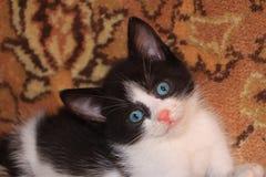 kattungen little skr?mmde royaltyfria bilder
