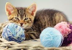 Kattungen med ett garn klumpa ihop sig av ull royaltyfri foto