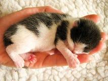 Kattungen på gömma i handflatan av en hand arkivbild