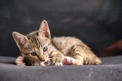 Kattungen poserar på stolen Arkivbilder