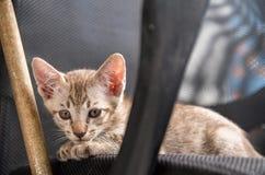 Kattungen poserar på stolen Royaltyfri Fotografi