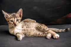 Kattungen poserar på stolen Arkivbild