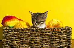 Kattungen sitter i en korg med bollar av ull Favorit- handarbete är en hobby arkivbilder