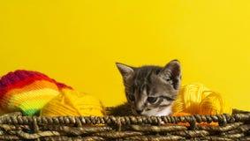 Kattungen sitter i en korg med bollar av ull Favorit- handarbete är en hobby royaltyfri foto