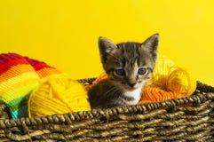 Kattungen sitter i en korg med bollar av ull Favorit- handarbete är en hobby arkivfoto