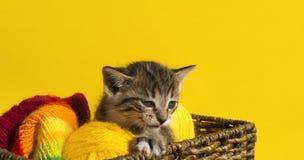 Kattungen sitter i en korg med bollar av ull Favorit- handarbete är en hobby arkivbild