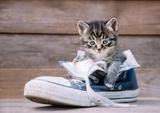 Kattungen sitter i en sko royaltyfri foto