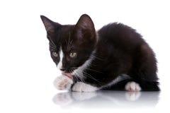Kattungen slickar en tafsa. Fotografering för Bildbyråer