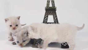 Kattungen som går runt om near, turnerar Eiffel som isoleras arkivfilmer