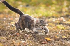 kattungen som spelar med sidor i höst, parkerar Royaltyfri Fotografi