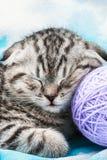 Kattungen sover på tovorna av garn Royaltyfri Fotografi