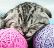 Kattungen sover på tovorna av garn Royaltyfria Bilder