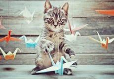 Kattungen spelar med färgrika pappers- kranar Royaltyfri Foto