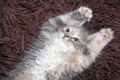 kattungen tafsar upp Royaltyfri Fotografi