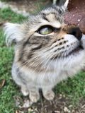 Kattungen undersöker bladet royaltyfria bilder