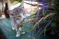 Kattungen upptäcker världen Arkivbild