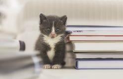Kattungesammanträde bredvid högen av böcker Arkivbild