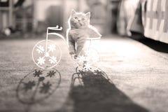 Kattungesammanträde i en cykelblomkruka Royaltyfri Foto