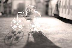 Kattungesammanträde i en cykelblomkruka Royaltyfri Fotografi