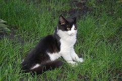 Kattungesammanträde i gräset Arkivfoto