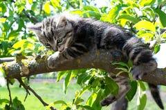 Kattungesammanträde på en trädfilial Royaltyfria Foton