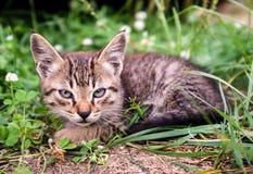 Kattungesammanträde i gräset. Royaltyfri Fotografi