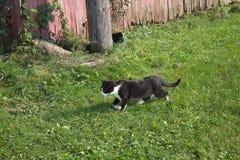 Kattungespring i gräs Royaltyfria Foton